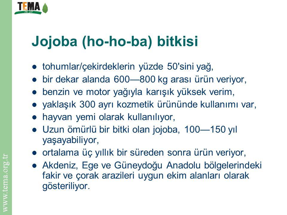 www.tema.org.tr Jojoba (ho-ho-ba) bitkisi tohumlar/çekirdeklerin yüzde 50'sini yağ, bir dekar alanda 600—800 kg arası ürün veriyor, benzin ve motor ya