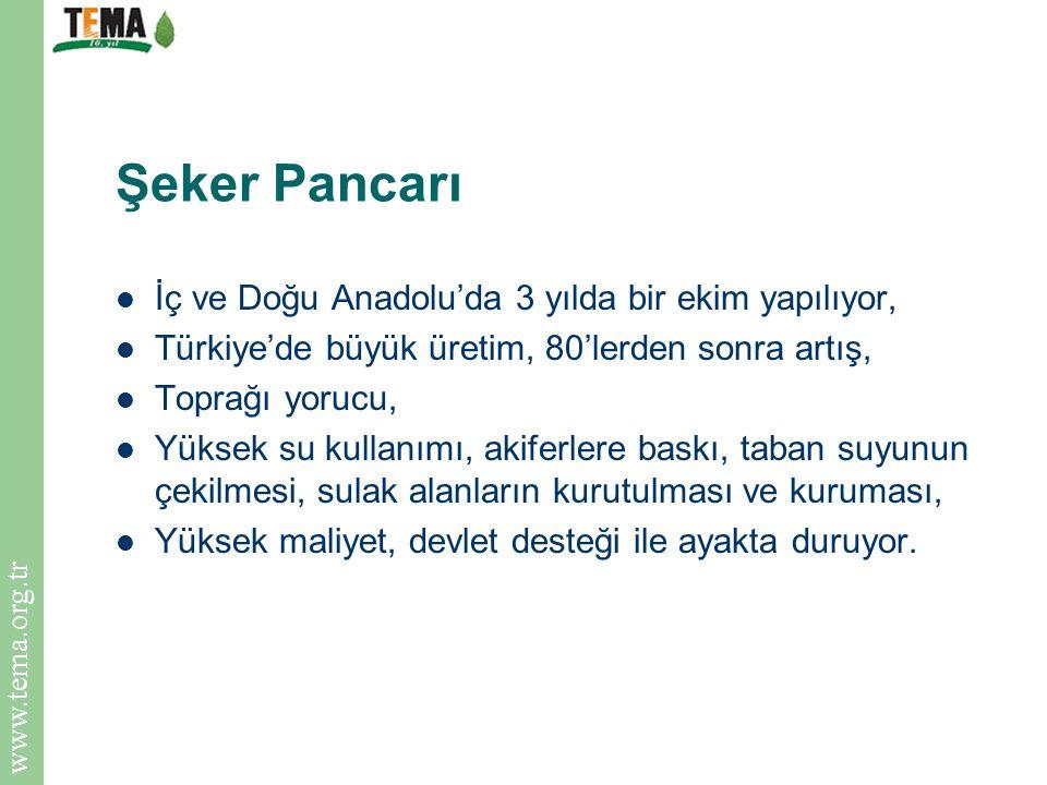 www.tema.org.tr Şeker Pancarı İç ve Doğu Anadolu'da 3 yılda bir ekim yapılıyor, Türkiye'de büyük üretim, 80'lerden sonra artış, Toprağı yorucu, Yüksek