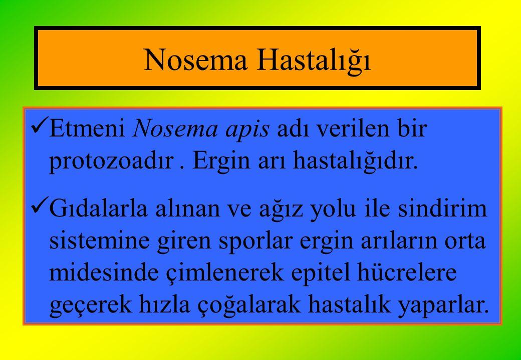 Nosema Hastalığı Etmeni Nosema apis adı verilen bir protozoadır. Ergin arı hastalığıdır. Gıdalarla alınan ve ağız yolu ile sindirim sistemine giren sp