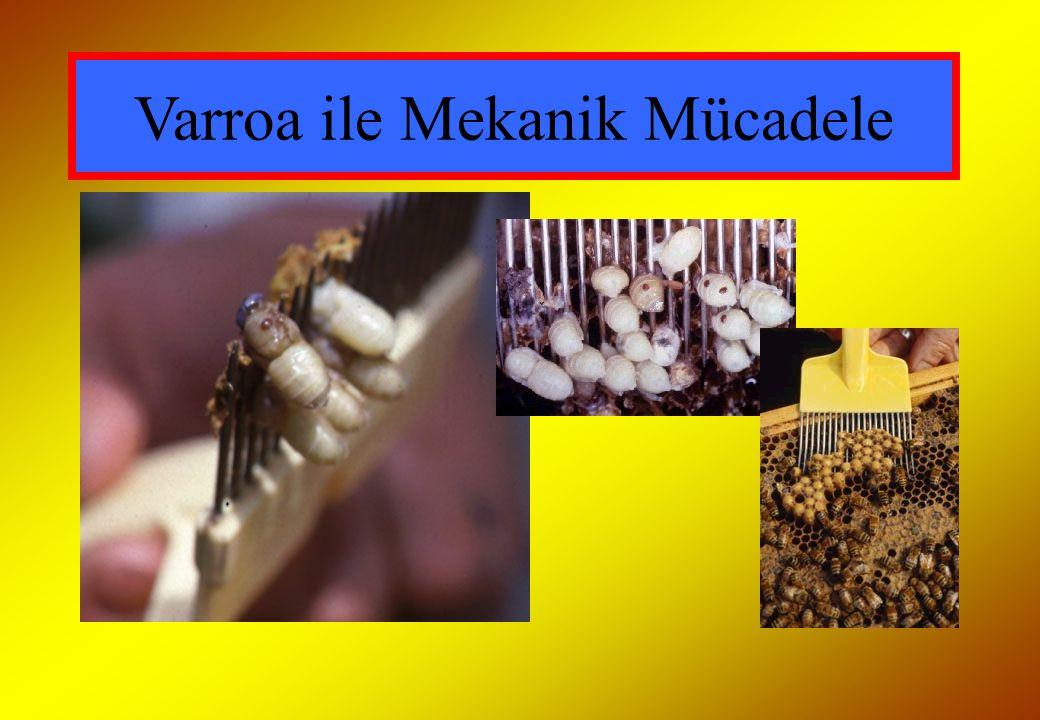 Varroa ile Mekanik Mücadele