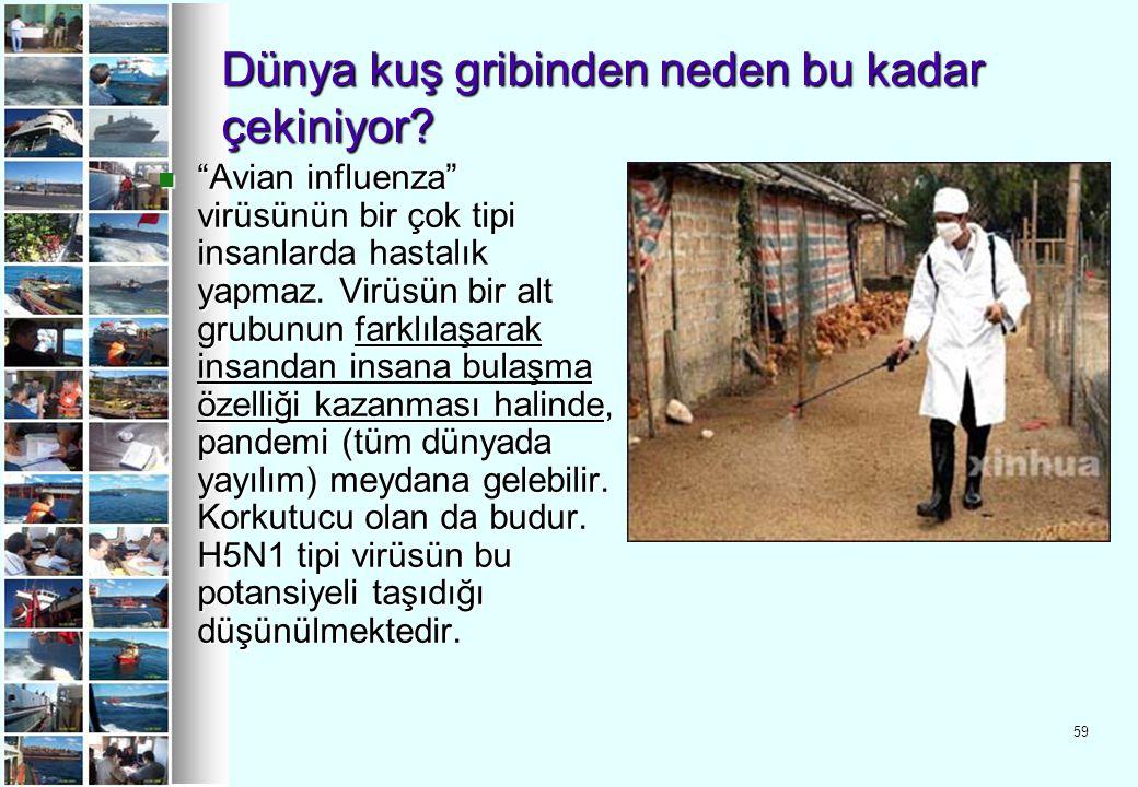 """59 Dünya kuş gribinden neden bu kadar çekiniyor? """"Avian influenza"""" virüsünün bir çok tipi insanlarda hastalık yapmaz. Virüsün bir alt grubunun farklıl"""