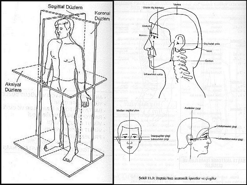 KRANYUM LATERAL Görülebilen yapılar Paryetal kemik Oksipital kemik Kısmen frontal kemik Temporal kemik Sella tursika Sinüsler