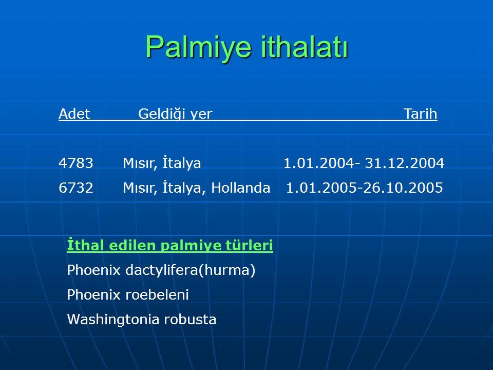 Palmiye ithalatı Adet Geldiği yer Tarih 4783 Mısır, İtalya 1.01.2004- 31.12.2004 6732 Mısır, İtalya, Hollanda 1.01.2005-26.10.2005 İthal edilen palmiye türleri Phoenix dactylifera(hurma) Phoenix roebeleni Washingtonia robusta