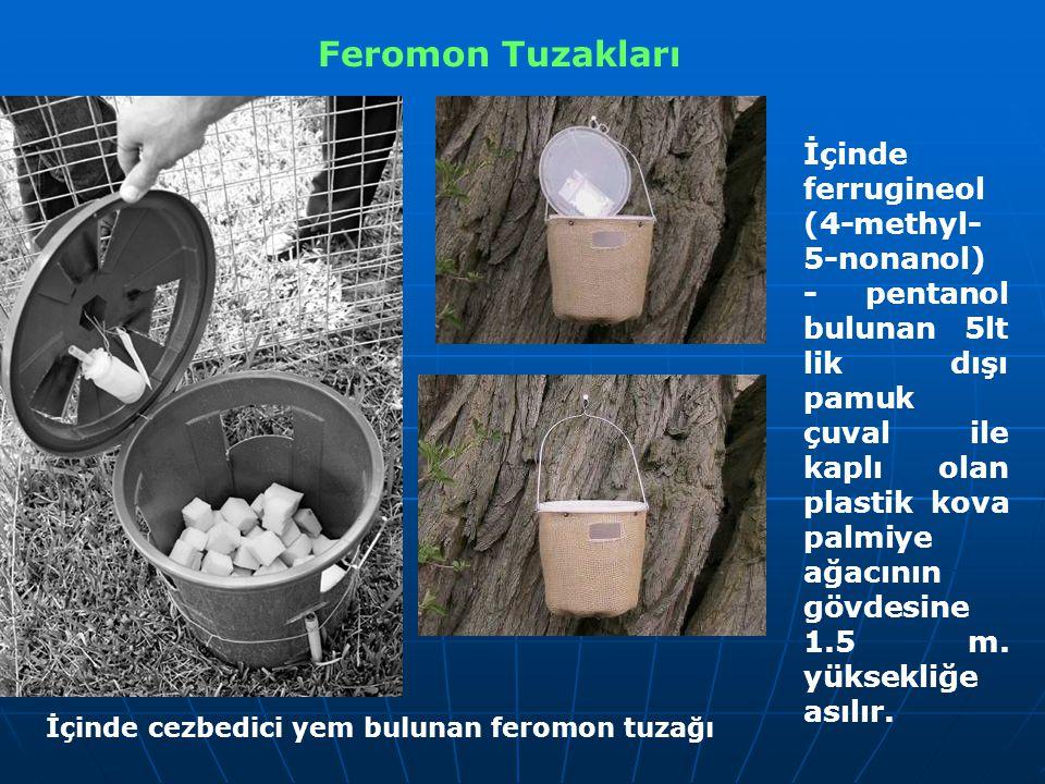 Feromon Tuzakları İçinde cezbedici yem bulunan feromon tuzağı İçinde ferrugineol (4-methyl- 5-nonanol) - pentanol bulunan 5lt lik dışı pamuk çuval ile kaplı olan plastik kova palmiye ağacının gövdesine 1.5 m.