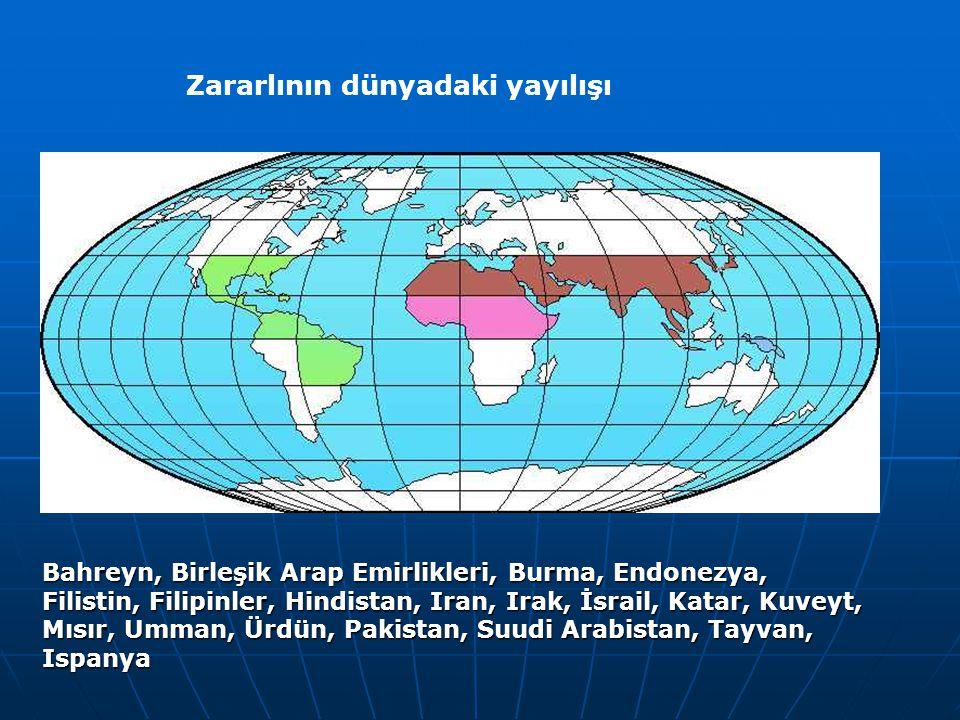 Zararlının dünyadaki yayılışı Bahreyn, Birleşik Arap Emirlikleri, Burma, Endonezya, Filistin, Filipinler, Hindistan, Iran, Irak, İsrail, Katar, Kuveyt, Mısır, Umman, Ürdün, Pakistan, Suudi Arabistan, Tayvan, Ispanya