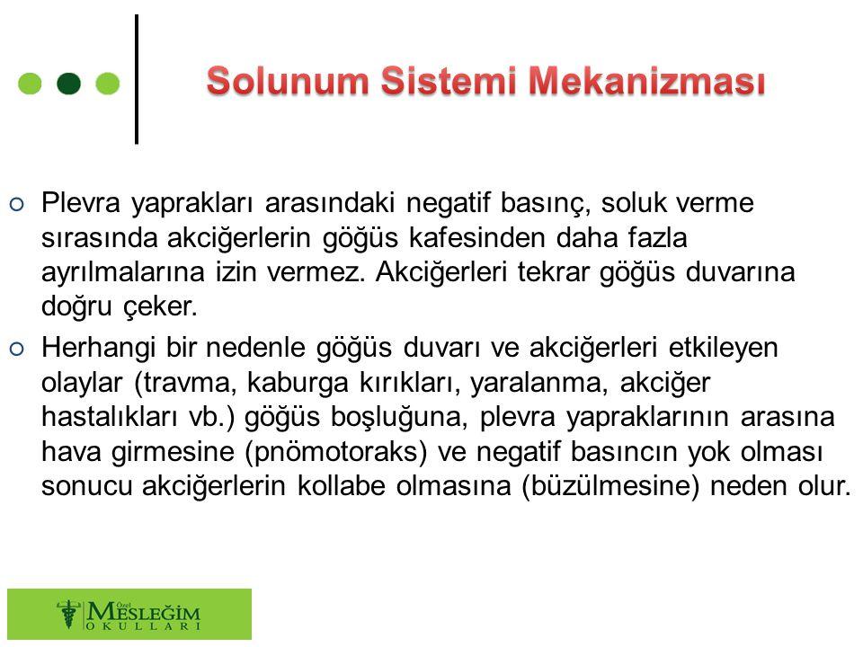 ○ Plevra yaprakları arasındaki negatif basınç, soluk verme sırasında akciğerlerin göğüs kafesinden daha fazla ayrılmalarına izin vermez. Akciğerleri t