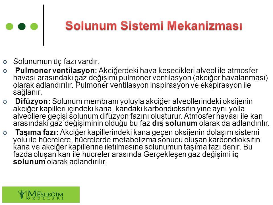○ Solunumun üç fazı vardır: ○ Pulmoner ventilasyon: Akciğerdeki hava kesecikleri alveol ile atmosfer havası arasındaki gaz değişimi pulmoner ventilasy