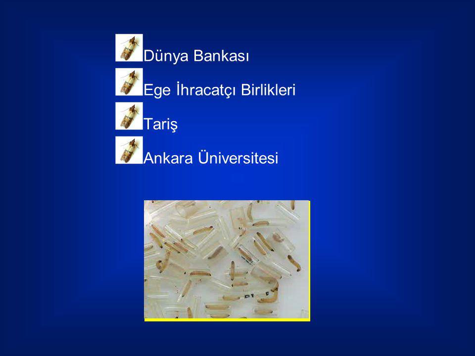 Dünya Bankası Ege İhracatçı Birlikleri Tariş Ankara Üniversitesi