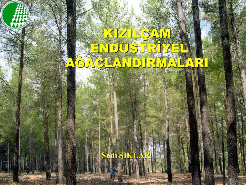 DÜNYA'DA DURUM Orman Alanları: 3.8 milyar ha.