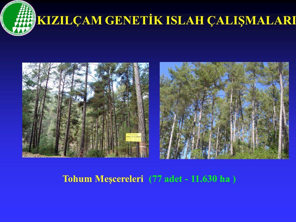 Tohum Meşcereleri (77 adet - 11.630 ha ) KIZILÇAM GENETİK ISLAH ÇALIŞMALARI
