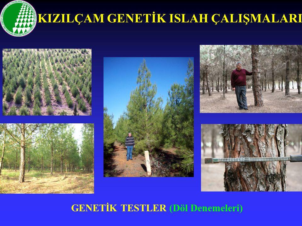 GENETİK TESTLER (Döl Denemeleri) KIZILÇAM GENETİK ISLAH ÇALIŞMALARI