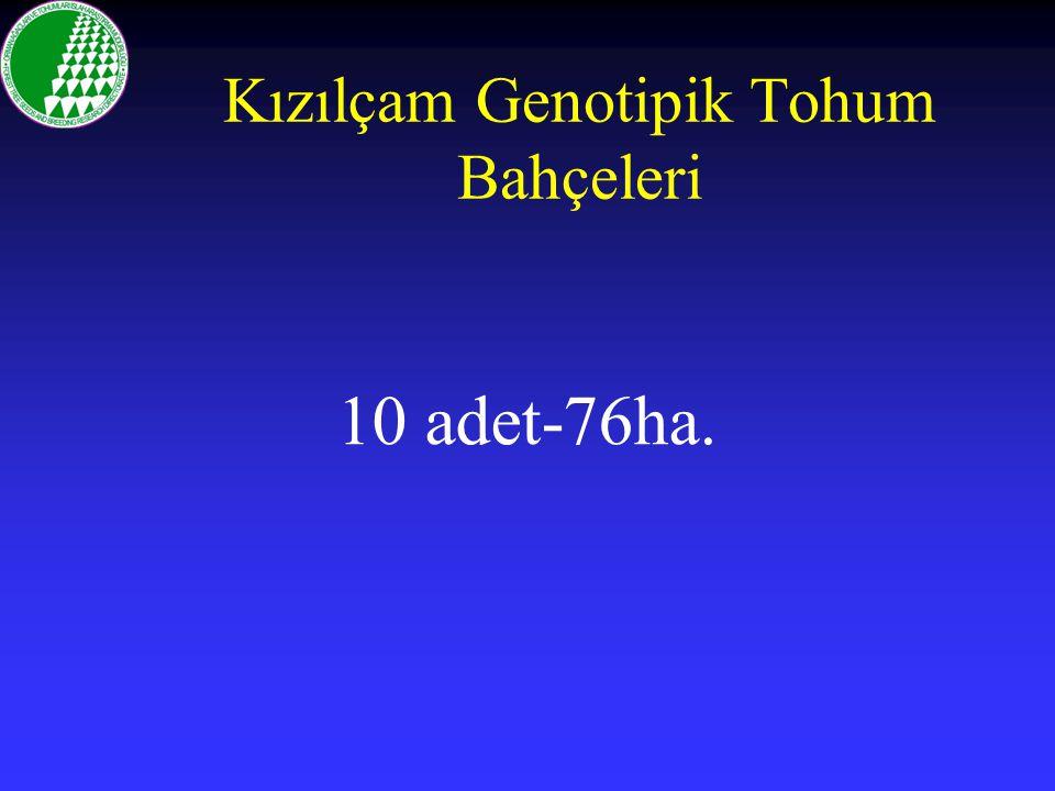 Kızılçam Genotipik Tohum Bahçeleri 10 adet-76ha.