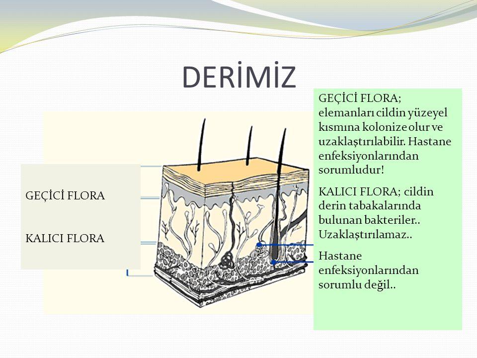 DERİMİZ GEÇİCİ FLORA KALICI FLORA GEÇİCİ FLORA; elemanları cildin yüzeyel kısmına kolonize olur ve uzaklaştırılabilir. Hastane enfeksiyonlarından soru