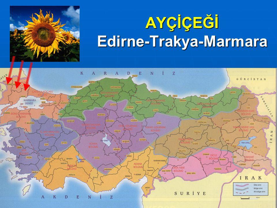 AYÇİÇEĞİ Edirne-Trakya-Marmara