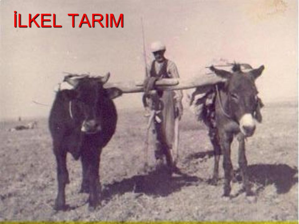 İLKEL TARIM