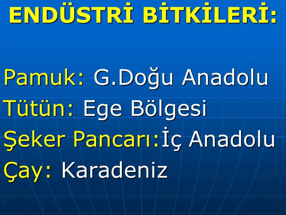 ENDÜSTRİ BİTKİLERİ: Pamuk: G.Doğu Anadolu Tütün: Ege Bölgesi Şeker Pancarı:İç Anadolu Çay: Karadeniz