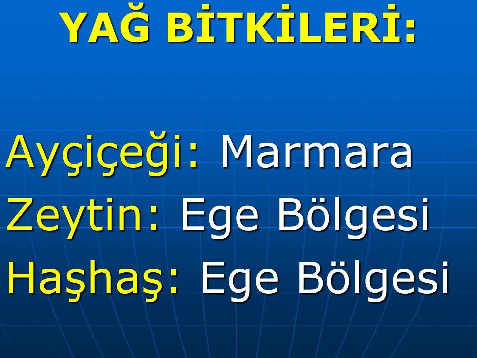 YAĞ BİTKİLERİ: Ayçiçeği: Marmara Zeytin: Ege Bölgesi Haşhaş: Ege Bölgesi