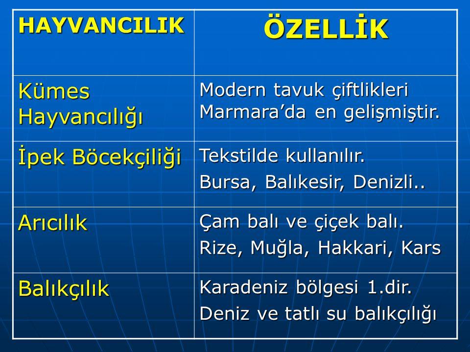 HAYVANCILIKÖZELLİK Kümes Hayvancılığı Modern tavuk çiftlikleri Marmara'da en gelişmiştir.