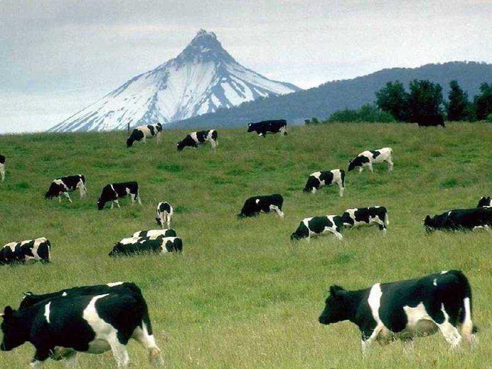 Yüksek dağlık alanlardaki otlaklarda hangi faaliyetlerde bulunulabilir?