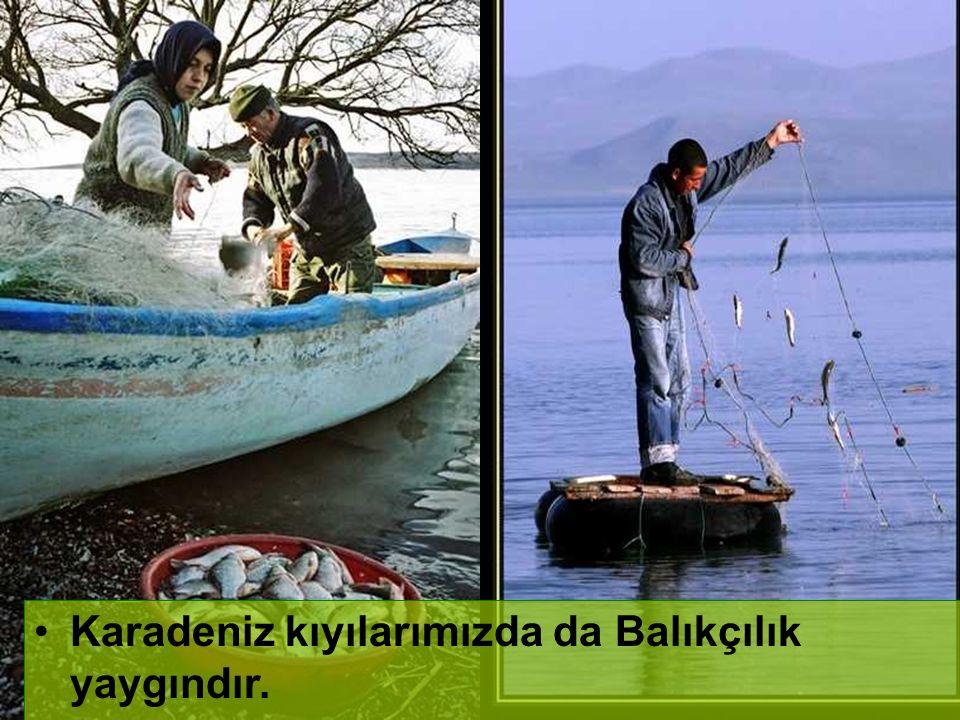 Akdeniz ve Ege kıyılarımız turizm yaygındır