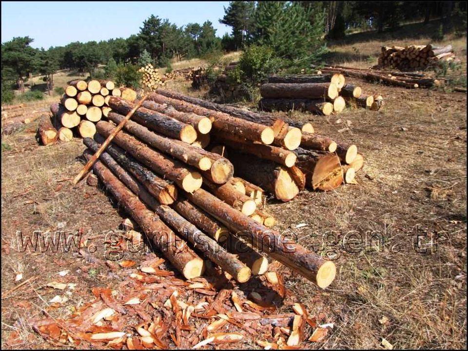 Ormanların bol olduğu bir yerde hangi ekonomik faaliyetler olabilir?