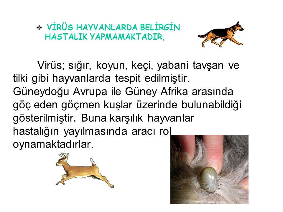 17 Virüs; sığır, koyun, keçi, yabani tavşan ve tilki gibi hayvanlarda tespit edilmiştir. Güneydoğu Avrupa ile Güney Afrika arasında göç eden göçmen ku