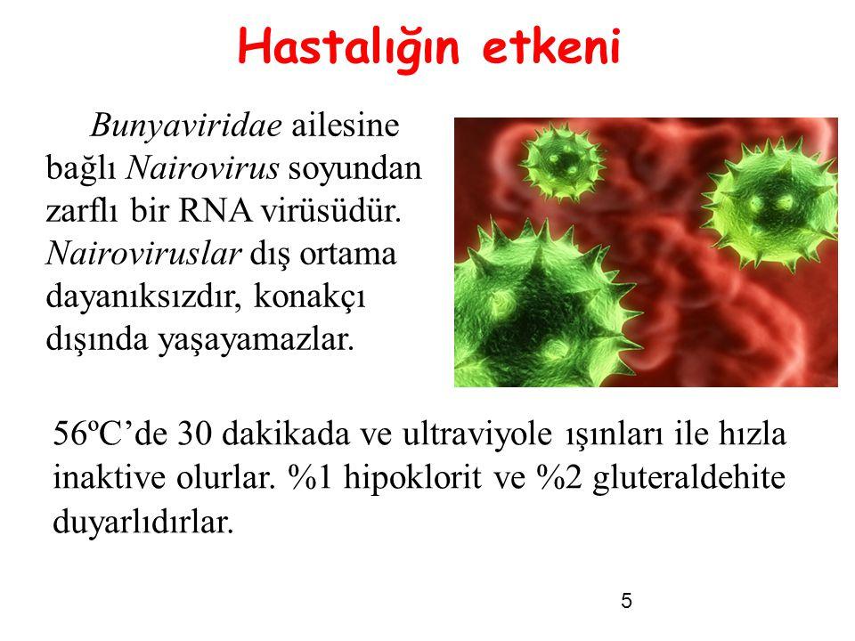 5 Bunyaviridae ailesine bağlı Nairovirus soyundan zarflı bir RNA virüsüdür. Nairoviruslar dış ortama dayanıksızdır, konakçı dışında yaşayamazlar. NAIR