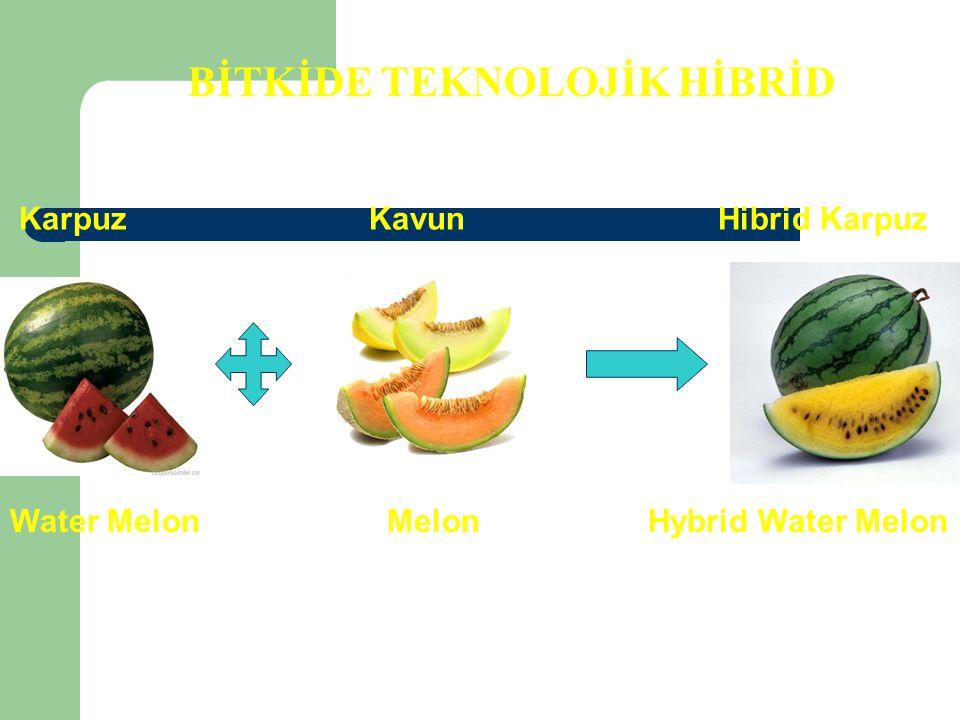 BİTKİDE TEKNOLOJİK HİBRİD Karpuz Kavun Hibrid Karpuz Water Melon Melon Hybrid Water Melon