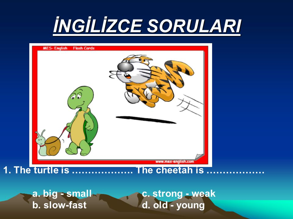 İNGİLİZCE SORULARI 1. The turtle is ………………. The cheetah is ……………… a.