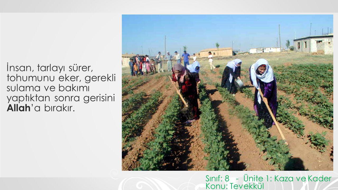 İnsan, tarlayı sürer, tohumunu eker, gerekli sulama ve bakımı yaptıktan sonra gerisini Allah 'a bırakır. Sınıf: 8 - Ünite 1: Kaza ve Kader Konu: Tevek