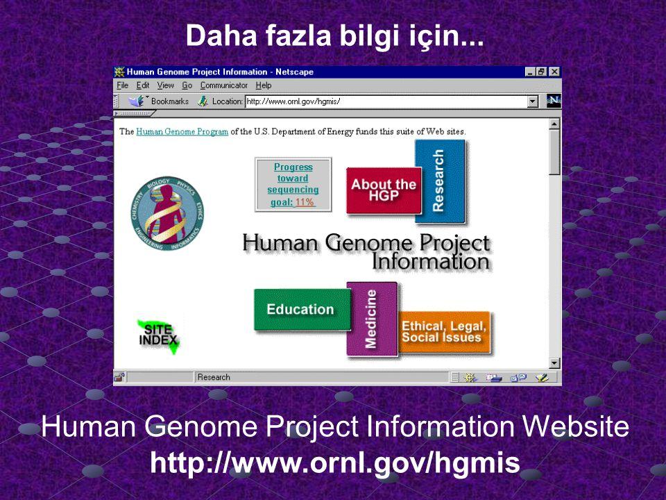 Human Genome Project Information Website http://www.ornl.gov/hgmis Daha fazla bilgi için...