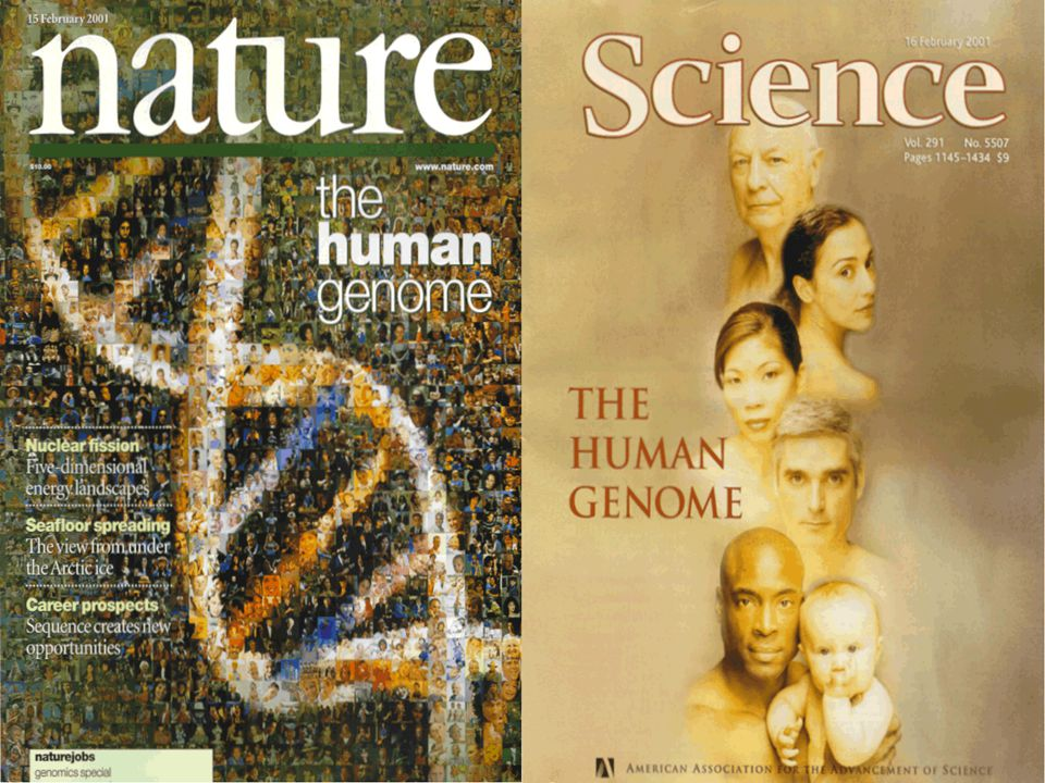 İnsan Genom Projesi (HGP) Sonuç İnsan Genomunun tümünün diziliminin bitişi İnsan Genomunun tümünün diziliminin bitişi Yeni bilim ve Tıp dalı – Genomiks ve alt dallarının ortaya çıkması Yeni bilim ve Tıp dalı – Genomiks ve alt dallarının ortaya çıkmasıSonuç İnsan Genomunun tümünün diziliminin bitişi İnsan Genomunun tümünün diziliminin bitişi Yeni bilim ve Tıp dalı – Genomiks ve alt dallarının ortaya çıkması Yeni bilim ve Tıp dalı – Genomiks ve alt dallarının ortaya çıkması