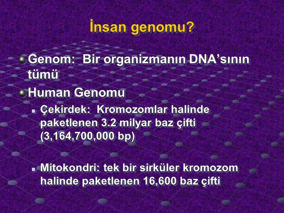 İnsan genomu tüm insanlarda hemen hemen aynıdır (%99.9), sadece % 0.1'i farklıdır İnsan genomunun yaklaşık sadece %2'si genler içermektedir, ki bu bölümler proteinler için kod taşımaktadırlar İnsan Genom Projesi'nden Öğrendiklerimiz