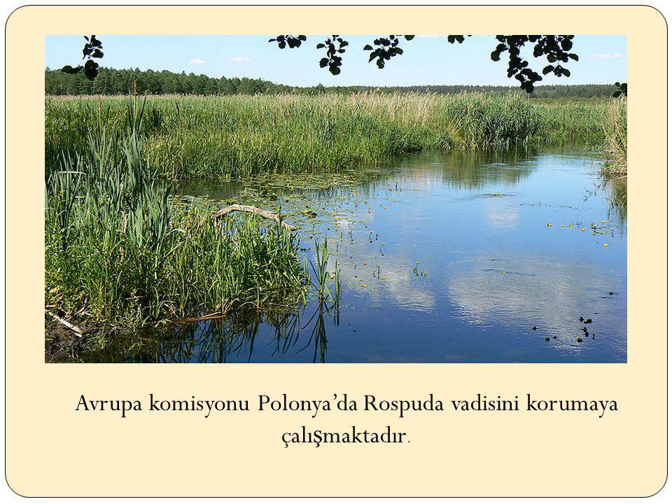 Avrupa komisyonu Polonya'da Rospuda vadisini korumaya çalı ş maktadır.