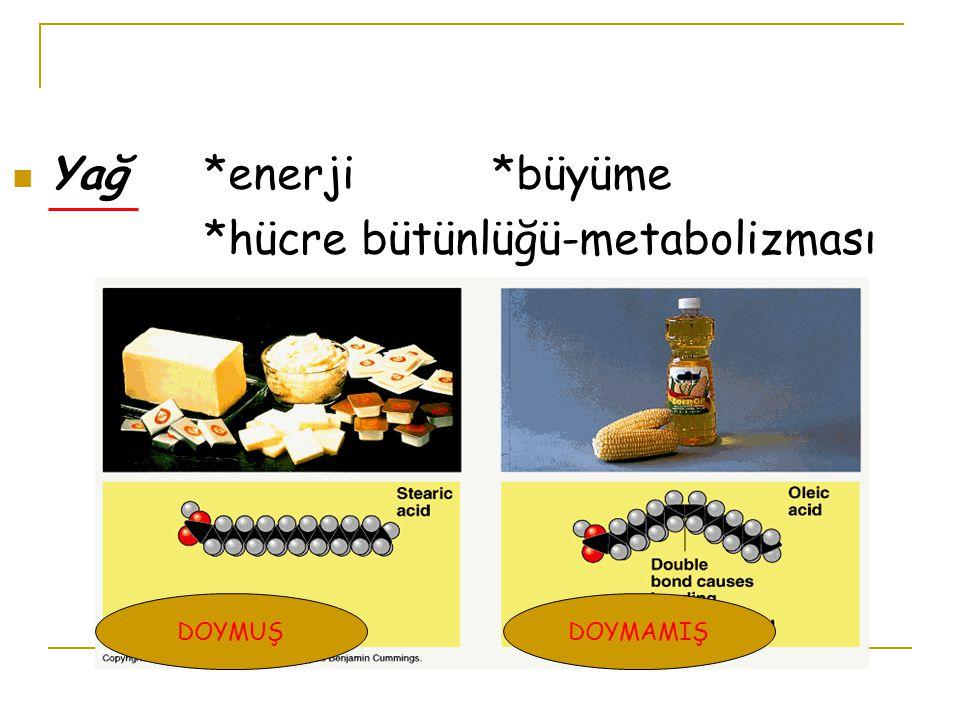 Yağ*enerji*büyüme *hücre bütünlüğü-metabolizması DOYMAMIŞDOYMUŞ