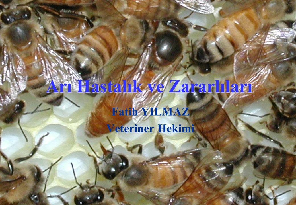 Arı Hastalık ve Zararlıları Fatih YILMAZ Veteriner Hekimi