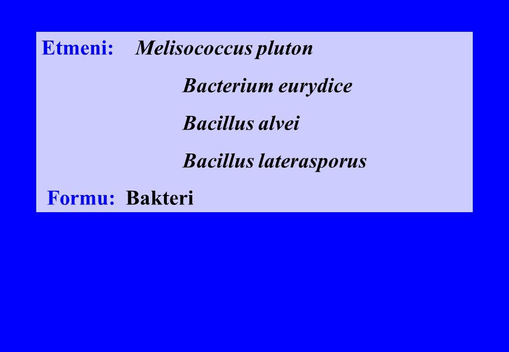 Etmeni: Melisococcus pluton Bacterium eurydice Bacillus alvei Bacillus laterasporus Formu: Bakteri