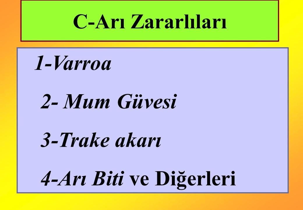 C-Arı Zararlıları 1-Varroa 2- Mum Güvesi 3-Trake akarı 4-Arı Biti ve Diğerleri