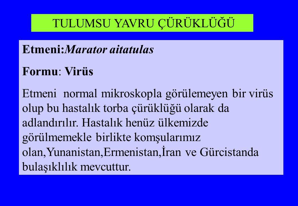 Etmeni:Marator aitatulas Formu: Virüs Etmeni normal mikroskopla görülemeyen bir virüs olup bu hastalık torba çürüklüğü olarak da adlandırılır. Hastalı