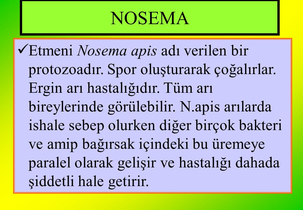 NOSEMA Etmeni Nosema apis adı verilen bir protozoadır. Spor oluşturarak çoğalırlar. Ergin arı hastalığıdır. Tüm arı bireylerinde görülebilir. N.apis a
