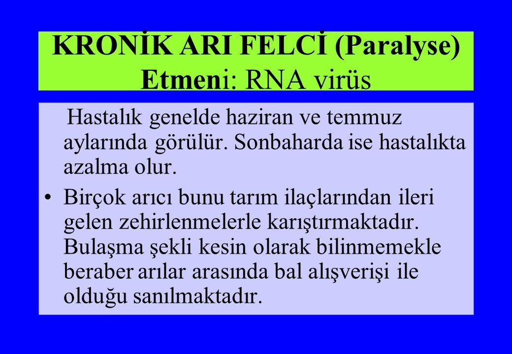 KRONİK ARI FELCİ (Paralyse) Etmeni: RNA virüs Hastalık genelde haziran ve temmuz aylarında görülür. Sonbaharda ise hastalıkta azalma olur. Birçok arıc
