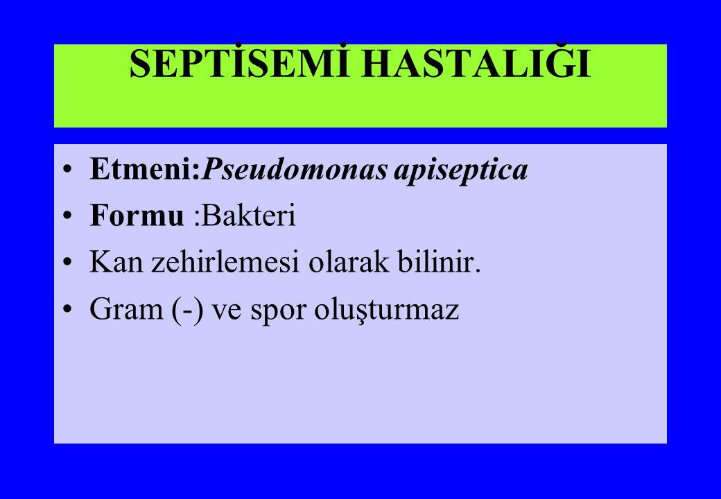 SEPTİSEMİ HASTALIĞI Etmeni:Pseudomonas apiseptica Formu :Bakteri Kan zehirlemesi olarak bilinir. Gram (-) ve spor oluşturmaz