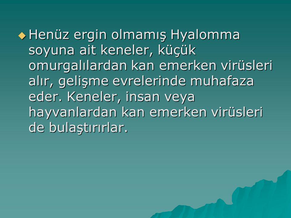  Henüz ergin olmamış Hyalomma soyuna ait keneler, küçük omurgalılardan kan emerken virüsleri alır, gelişme evrelerinde muhafaza eder. Keneler, insan