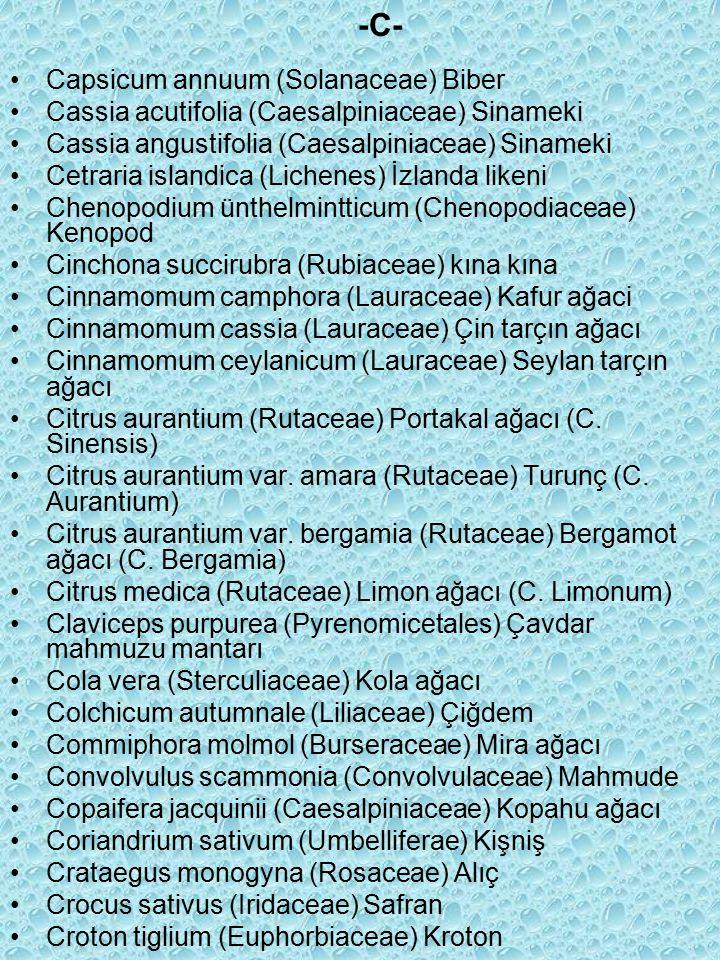 Capsicum annuum (Solanaceae) Biber Cassia acutifolia (Caesalpiniaceae) Sinameki Cassia angustifolia (Caesalpiniaceae) Sinameki Cetraria islandica (Lichenes) İzlanda likeni Chenopodium ünthelmintticum (Chenopodiaceae) Kenopod Cinchona succirubra (Rubiaceae) kına kına Cinnamomum camphora (Lauraceae) Kafur ağaci Cinnamomum cassia (Lauraceae) Çin tarçın ağacı Cinnamomum ceylanicum (Lauraceae) Seylan tarçın ağacı Citrus aurantium (Rutaceae) Portakal ağacı (C.