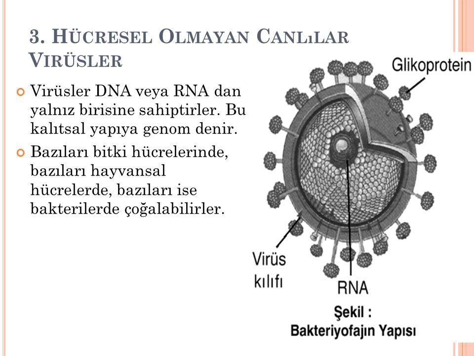 3.H ÜCRESEL O LMAYAN C ANLıLAR V IRÜSLER Virüsler DNA veya RNA dan yalnız birisine sahiptirler.