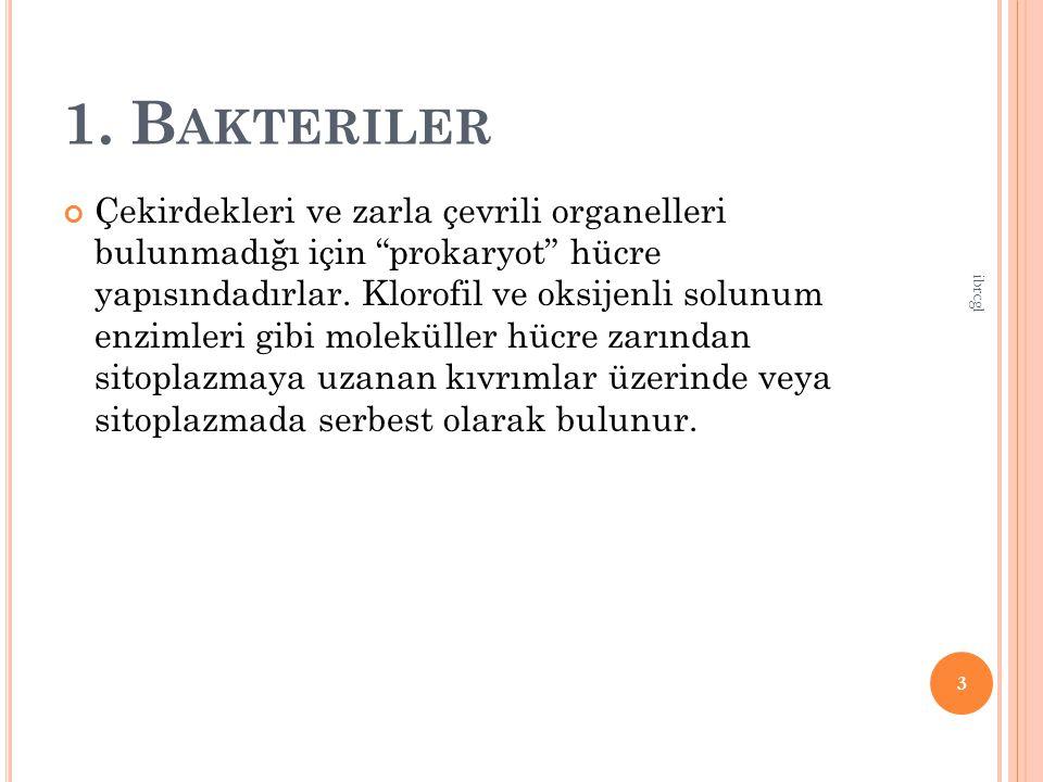 B.K EMOSENTEZ Y APANLAR Işık enerjisi kullanılmaz.