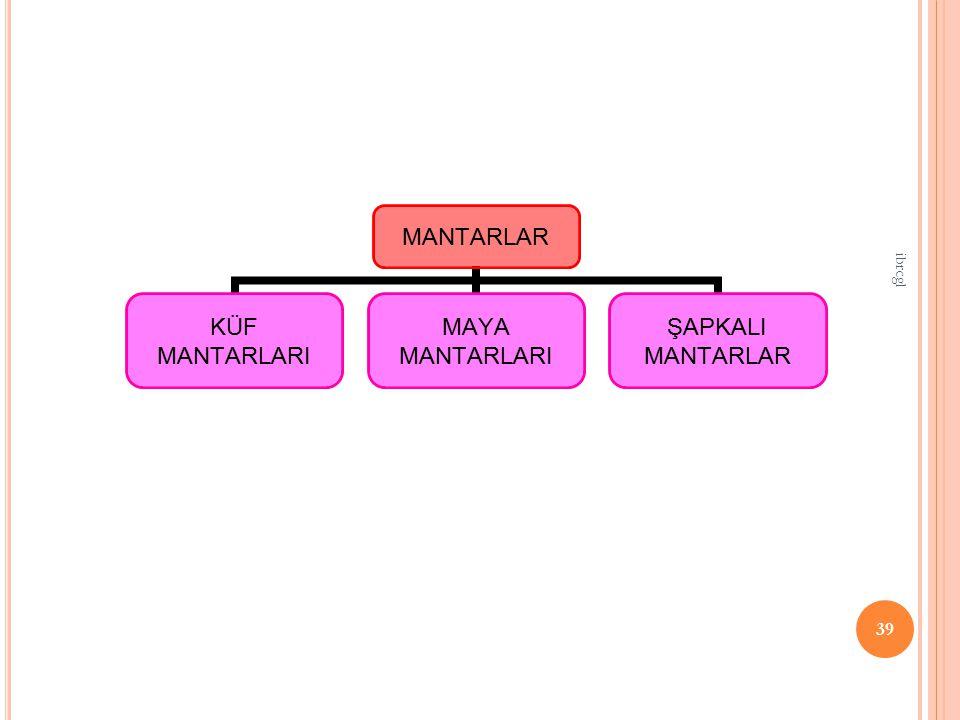 39 MANTARLAR KÜF MANTARLARI MAYA MANTARLARI ŞAPKALI MANTARLAR ibrcgl