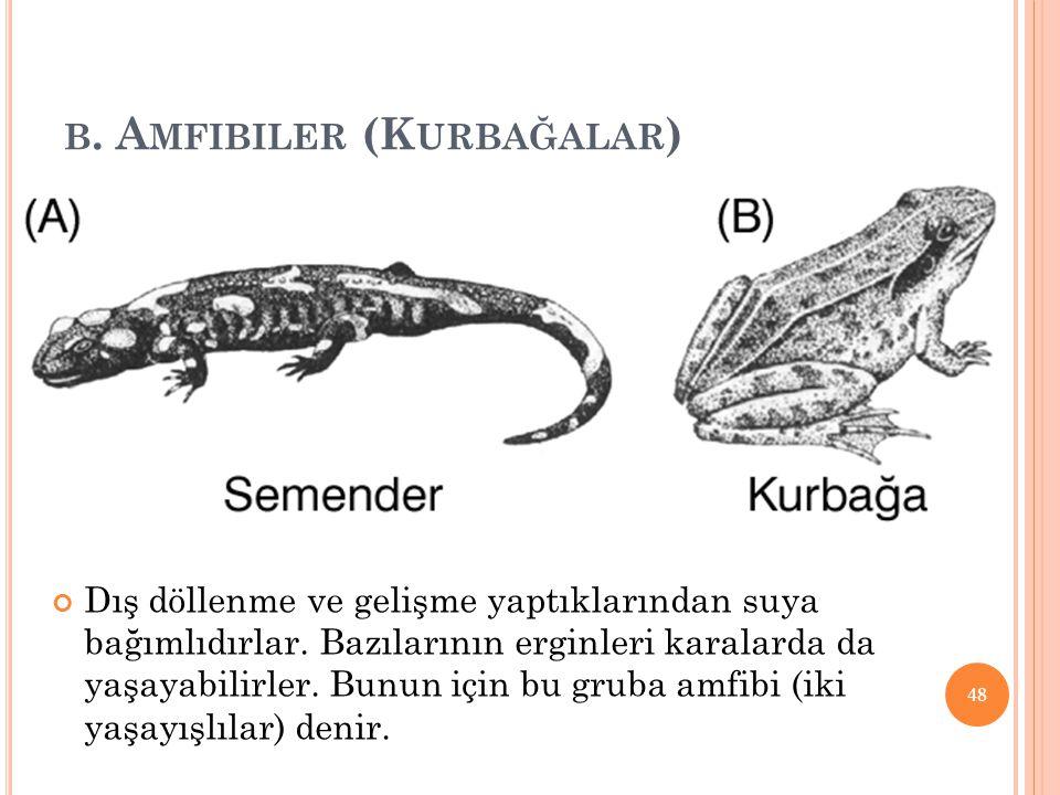 B.A MFIBILER (K URBAĞALAR ) Dış döllenme ve gelişme yaptıklarından suya bağımlıdırlar.