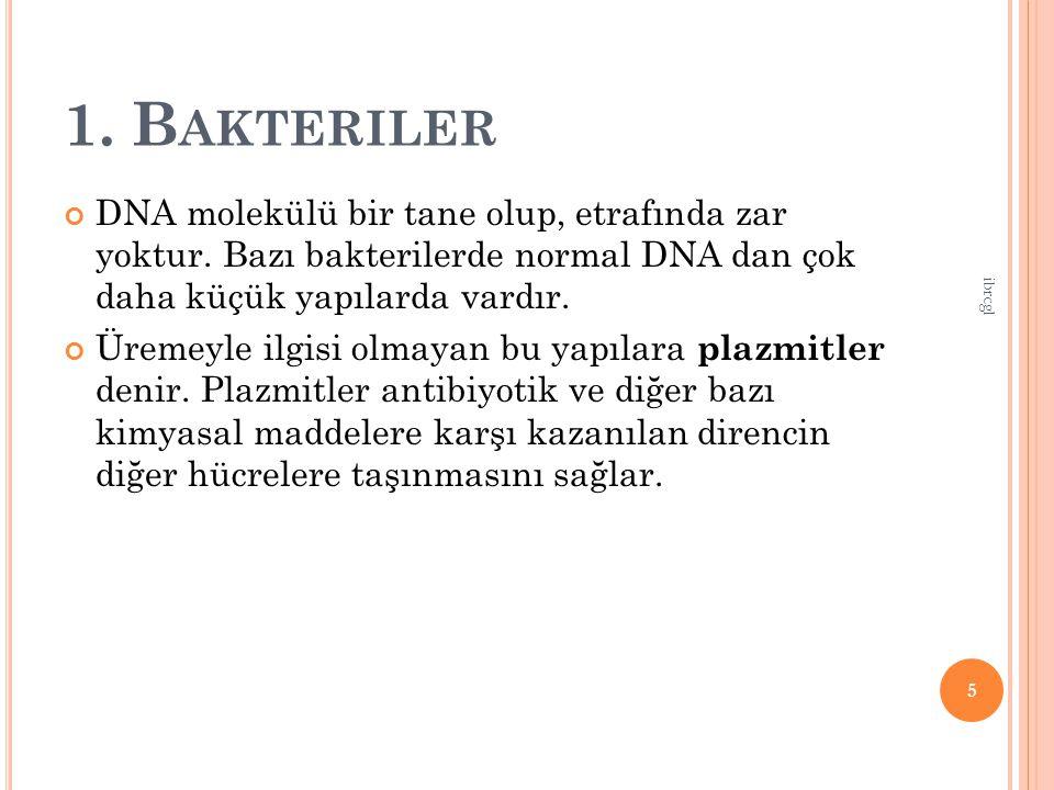 1.B AKTERILER DNA molekülü bir tane olup, etrafında zar yoktur.