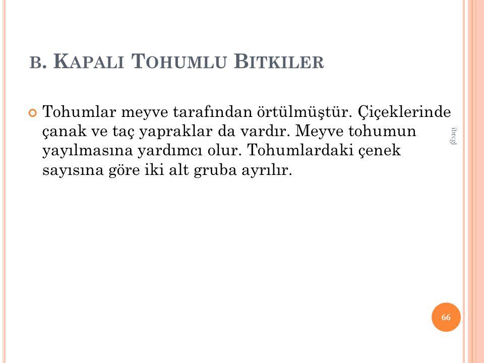 B.K APALI T OHUMLU B ITKILER Tohumlar meyve tarafından örtülmüştür.